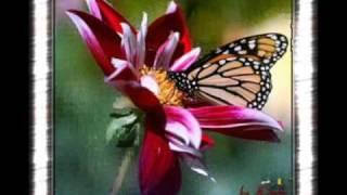 victor e leo-[borboleta]