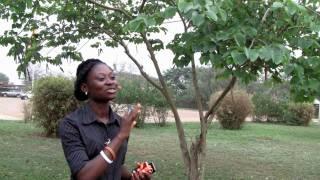 Rosemond Ohene: Giving Voice to Farmers in Ghana