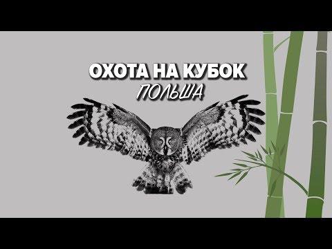 Охота на кубок / Польша