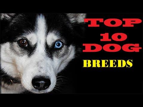 Top 10 Cutest Dog Breeds || Pictures 2017 ||