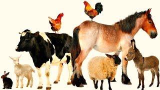 Названия животных и их голоса.