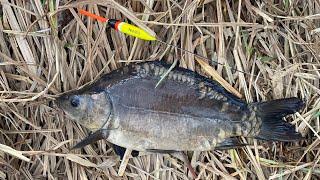 КАРП НА ПОПЛАВОК В КОРЯЖНИКЕ на маховую удочку Рыбалка на поплавок 2020 весной