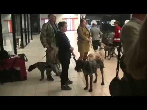 Euro Dog Show 2018 In Warsaw Poland 2