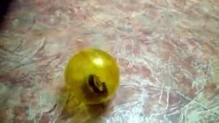Прогулочный шар для джунгарского хомячка