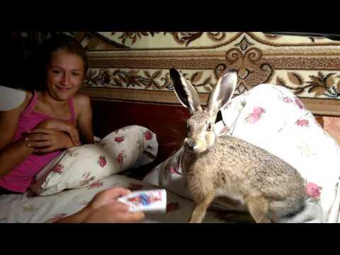Ручной домашний заяц !!!