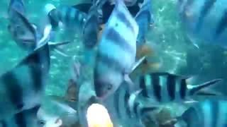 水中カメラのマイクがおかしいのか魚の歯がガチガチ鳴ってるのが聞こえづらい。