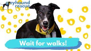 Greyhound Rescue  Wait for Walks