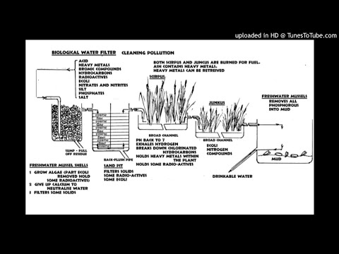 Biological Water Filter and Sewage Treatment - Bill Mollison
