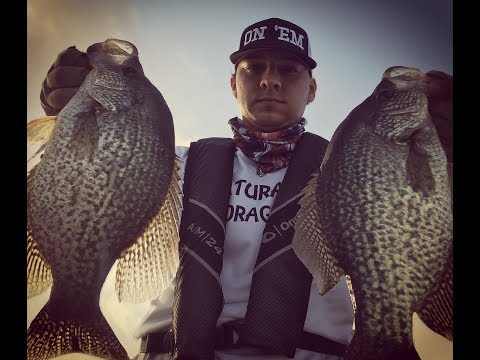 Toledo Bend Crappie Fishing And The T Shad From Natural Forage Baits In Thunder Chicken