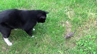Cat 🆚 Rat