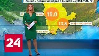Погода 24: юг Сибири под влиянием двух атмосферных фронтов