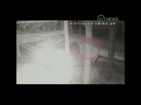 47news: Рядом со школой в Новой Ладоге мужчина пытался затащить 10-летнюю в машину