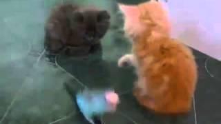 Приколы с животными  Котята и попугай