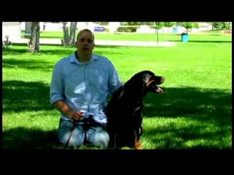 dog-training-tips-:-how-to-train-a-dog-not-to-bite