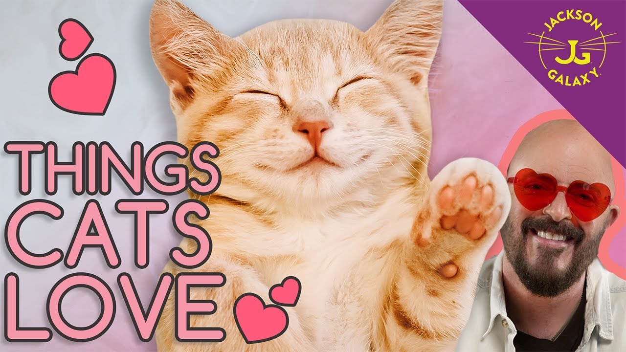 10 Things Your Cats Love!