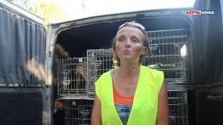 Отлов бродячих собак в Керчи продолжается
