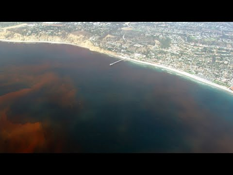 Red Tide Is Now Affecting ALL 3 Coasts