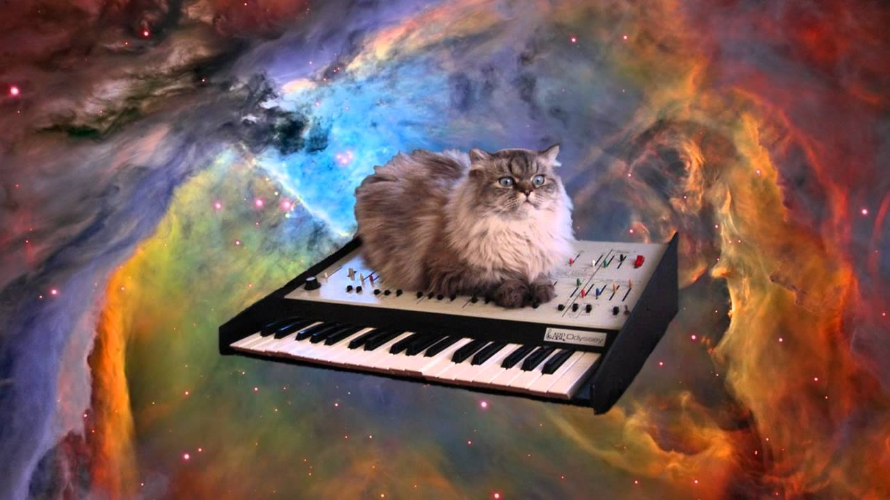 Funny Cat Videos On Piano