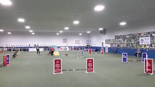 Novice FAST Preferred 1st Place - Title CCDAC Agility Trial January...
