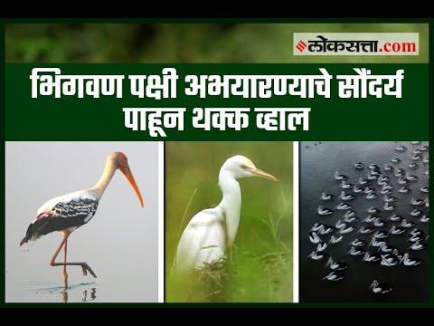 भिगवण पक्षी अभयारण्याचे सौंदर्य पाहून थक्क व्हाल | Bhigwan Bird Sanctuary | Maharashtra | Pune