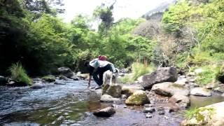 愛犬ロンと伊豆の川で涼んだ時の様子。「おいで~」と呼ぶとノッシノッ...