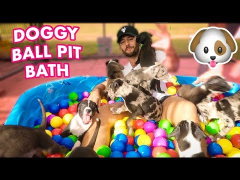 download EXTREME PUPPY BATH BALL PIT CHALLENGE!   I MADE A PUPPY BALL PIT FOR ALL MY PUPPIES!