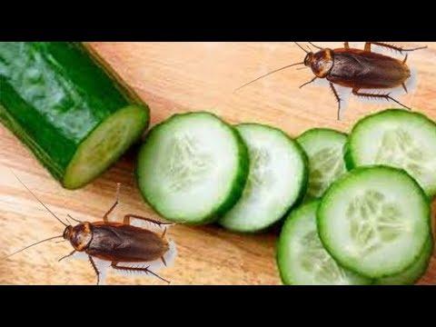 هل تزعجك الصراصير.. إليكم طريقة التخلص من الصراصير باستخدام الخيار فقط !