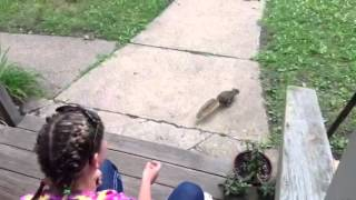How to hand feed a squirrel