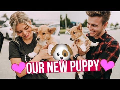 WE GOT A CORGI PUPPY! - WE'RE FINALLY PARENTS!