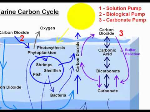 GW022 The Marine Carbon Cycle