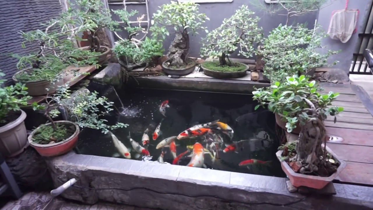 Simple Diy Koi Ponds Ideas 2018