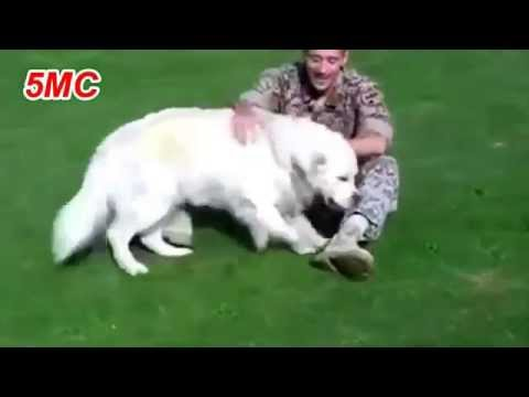 Dogs Welcoming Soldiers Home Compilation 2015 Part 2 5MC