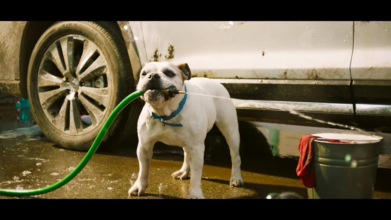 subaru ascent suv  subarus test  dogs tv commercial youtube