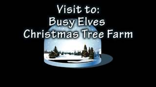 A visit to Busy Elves Christmas Tree Farm
