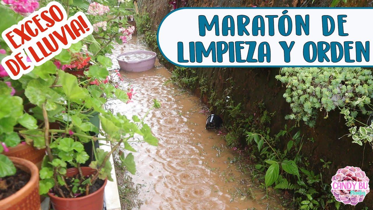 Se inundó mi jardín, tuve que mover las plantas por la lluvia y SOLUCIONANDO MÁS PROBLEMAS │Candy Bu