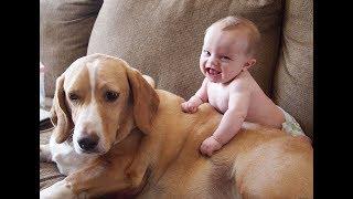 اطفال يضحكون مع كلاب Kids laugh with dogs