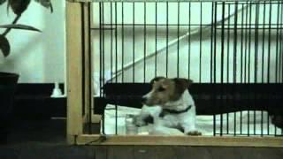 http://www.wanwanstudio.com/ ↑ ↑ ↑ ↑ ↑ ↑ ↑ もっと犬の動画を見たい方...