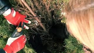 Уход за хвойными растениями весной. Советы и секреты. Выпуск 51(, 2016-05-12T16:04:50.000Z)
