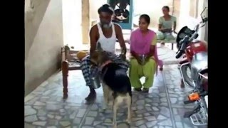 Good Dog in punjab (india)