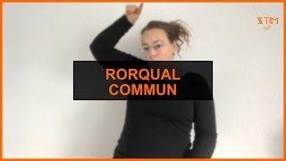 BIOLOGIE MARINE - Rorqual commun