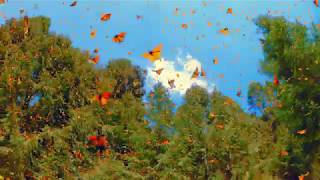 Real 4K HDR: Flight Of The Butterflies IMAX Clip in HDR