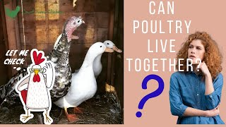 Combining Poultry - Can Chickens live with Ducks and Turkeys