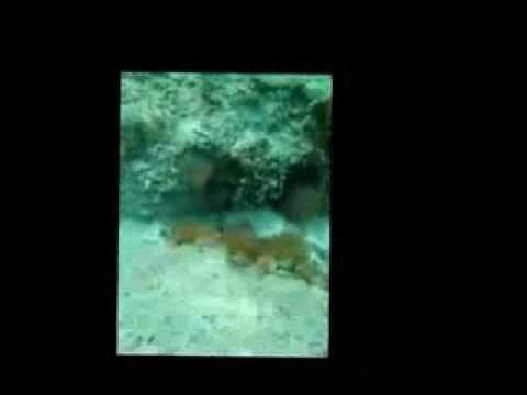 ibiza snorkeling =)