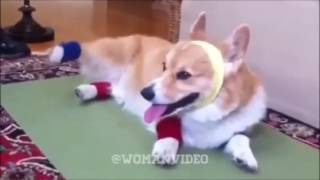 Даже собаки заниматься спортом😁