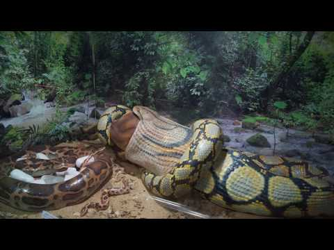 Guindy snake park and other reptiles | India's first reptile park.