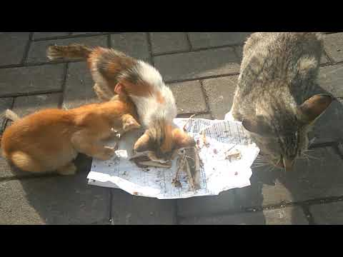 SURROUNDED BY HUNGRY STREET CATS. cats and kittens meowing loudly