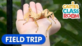 Let's Find Some Bugs | Caitie's Classroom