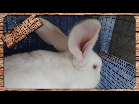 The Best Way To Treat Ear Mites In Rabbits - Without Chemicals Or Insecticides