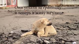 """социальная реклама  о животных""""Не бросай нас""""Мы в ответе за тех,кого приручили"""