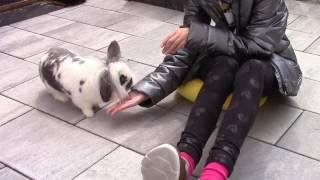 So gewinnst du das Vertrauen deiner Kaninchen! 🐰💗 Tipps | M. Mörki